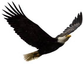 Eagle Picture And Images