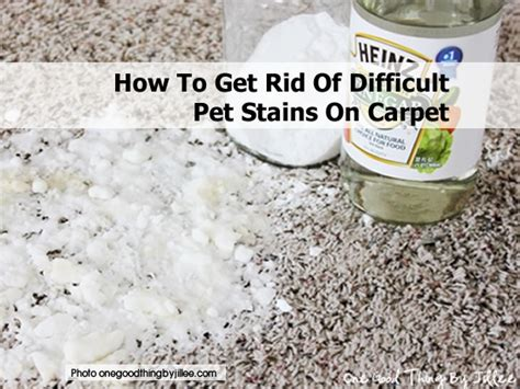how to get rid of stains on sofa 25 best images about cleaning on pinterest stains