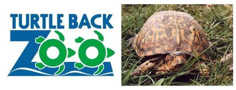 turtle back zoo lights 2017 denver zoo coupons 2017