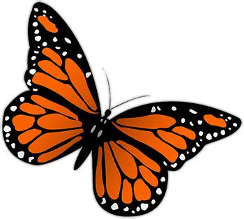 Butterflies Animated Clipart Best Images Of Animated Butterflies