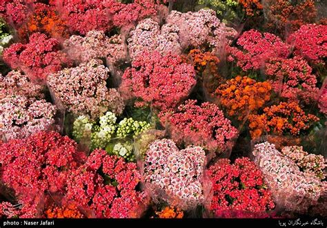 new year flower market 2018 photos iranians greet new year at flower markets
