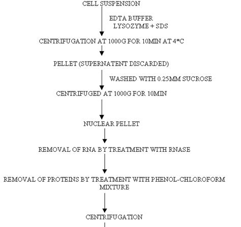 Biji Kopi Lung flow diagram for dna replication choice image how to guide and refrence