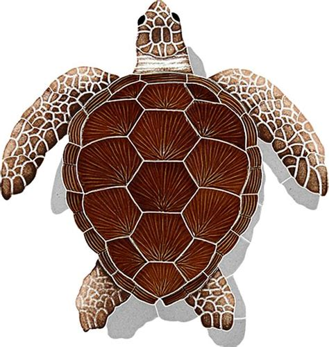 Turtle Top sea turtle top view