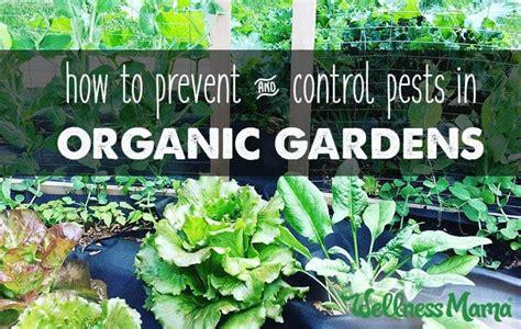 garden pest control prevention natural options