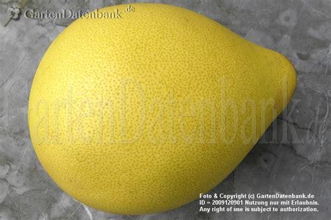 granatapfel wann reif pomelo wie sch 228 len essen wann reif infos mit bild
