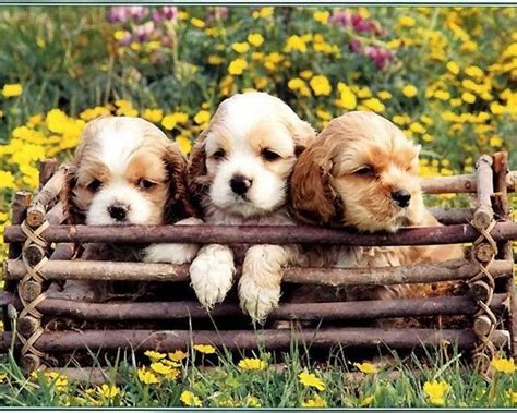 puppies and flowers puppies in flowers computer wallpaper wallpapersafari
