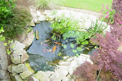small backyard koi pond koi pond