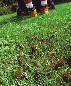 when should i aerate my lawn
