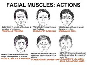 muscles of expression