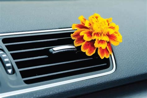 car air fresheners   review