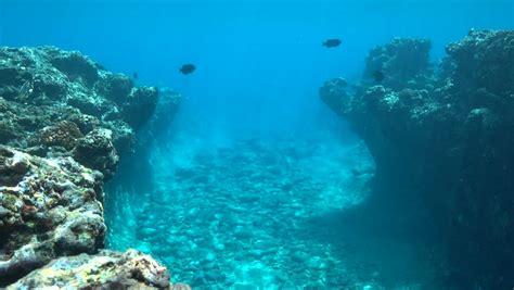 Underwater Landscape Rocky Ocean Floor Stock Footage
