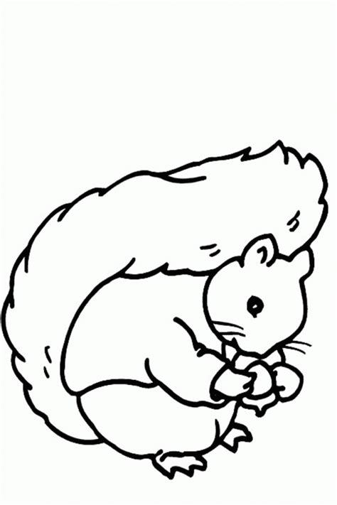 squirrel mario coloring pages free flying squirrel coloring page download free clip art