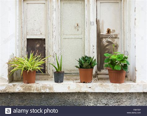 haus der wohnkultur soest sill plants window sill decoration from plants room