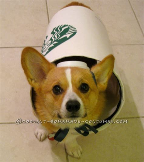 starbucks for dogs starbucks costume easy and inexpensive