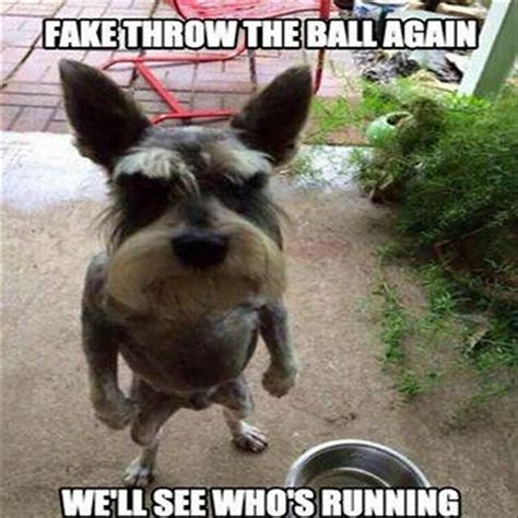 Really Funny Memes - really funny dog pictures 23 really funny dog memes funny