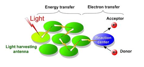 about photosynthetic antenna research center