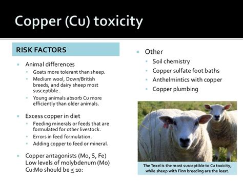 How Much Molybdenum For Copper Detox by Nutrional Disorders Nx