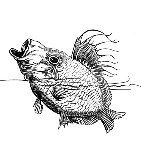 Detailed Fish Coloring Pages | detailed fish coloring pages coloring home