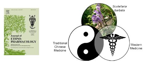 clinical applications integrated traditional medicine tcm and western medicine books current therapeutic and medicinal potential of