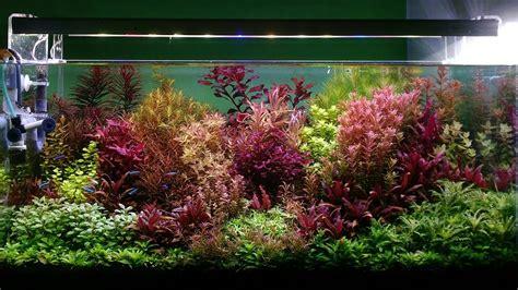 membuat aquascape dutch style stemstyle aquascape dutch style aquascape youtube