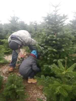 weihnachtsbaum selber schlagen brandenburg my blog