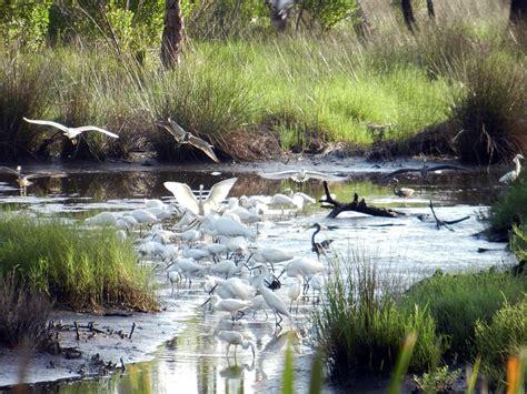backyard adventures st vincent artists and conservancy the 10 habitats of st vincent