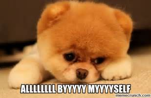 Puppy Eyes Meme - puppy eyes please meme meme in nanopics