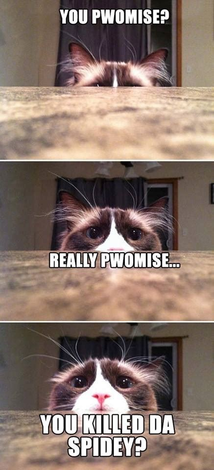 Funny Pictures With Memes - funny cat meme jokes memes pictures