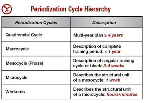 A Simple Guide To Periodization For Strength Training Breaking Muscle Periodization Program Template
