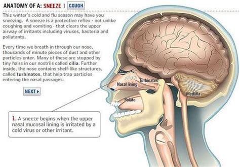 poliposi nasale e alimentazione naso chiuso tecniche chirurgiche miniinvasive a confronto