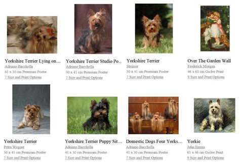 yorkie posters yorkie haircut poster yorkie poster terrier poster breeds picture