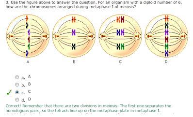 phschool science biology place lab bench laboratorio 3 mitosis y meiosis francheska camilo