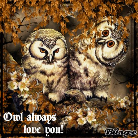 owl lover owl always love you picture 119115346 blingee com