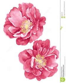 Wild Rose Flower - best 25 flower illustrations ideas on pinterest flower