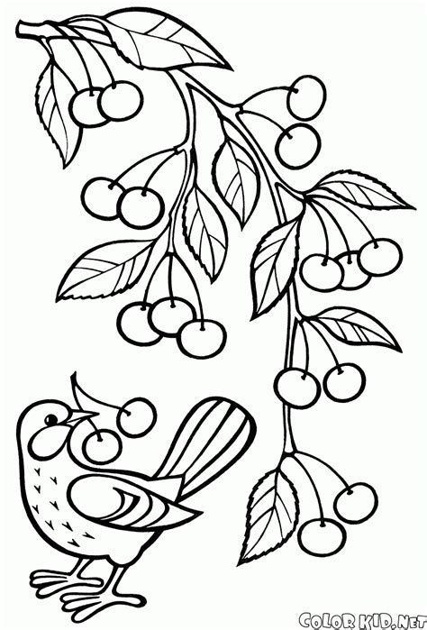 coloring page of a tree branch coloring page apple tree branch