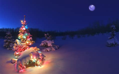 christmas tree light in snow hd wallpaper
