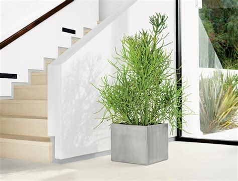 modern houseplants the modern houseplant chicago magazine chicago home