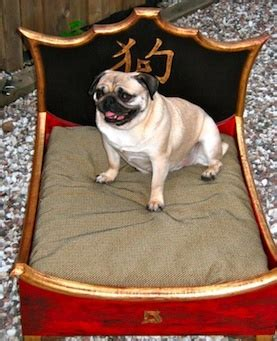 beds for pugs 132 best images about mops ie pug on a pug posts and puppys