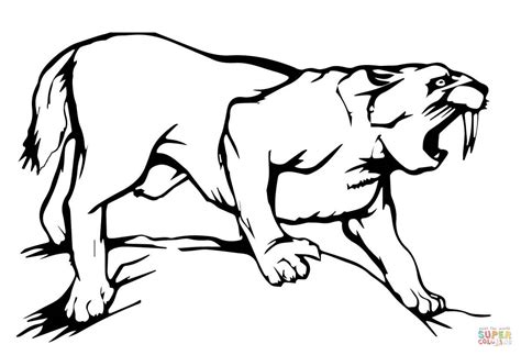 sabre tooth tiger coloring page free printable coloring