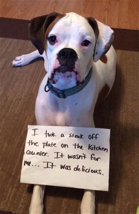 Dog Shaming Meme - funny dog shaming 22 pics