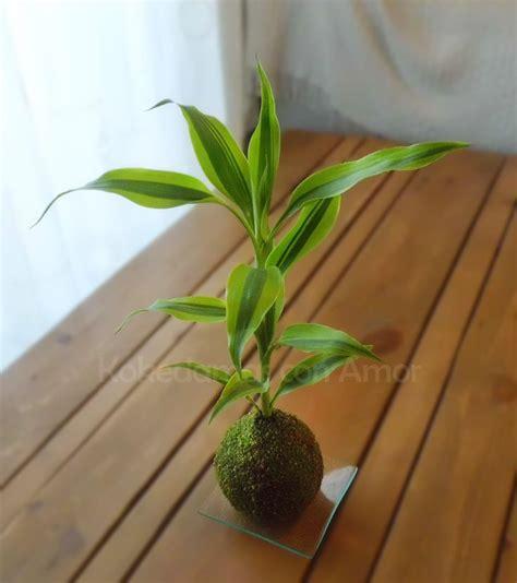 Ls For Indoor Plants by 453 Best Images About Japanse Mosballetjes Ikebana Bonsai