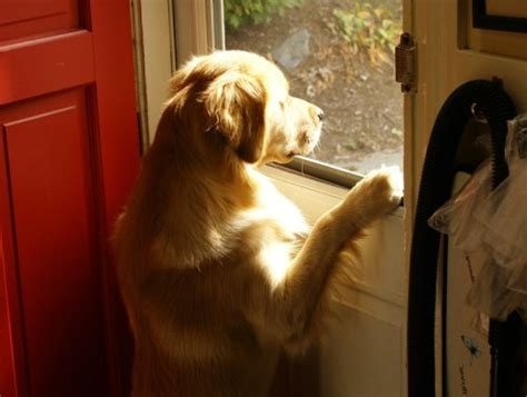 how to a puppy to go outside how to prevent a from asking in and out at