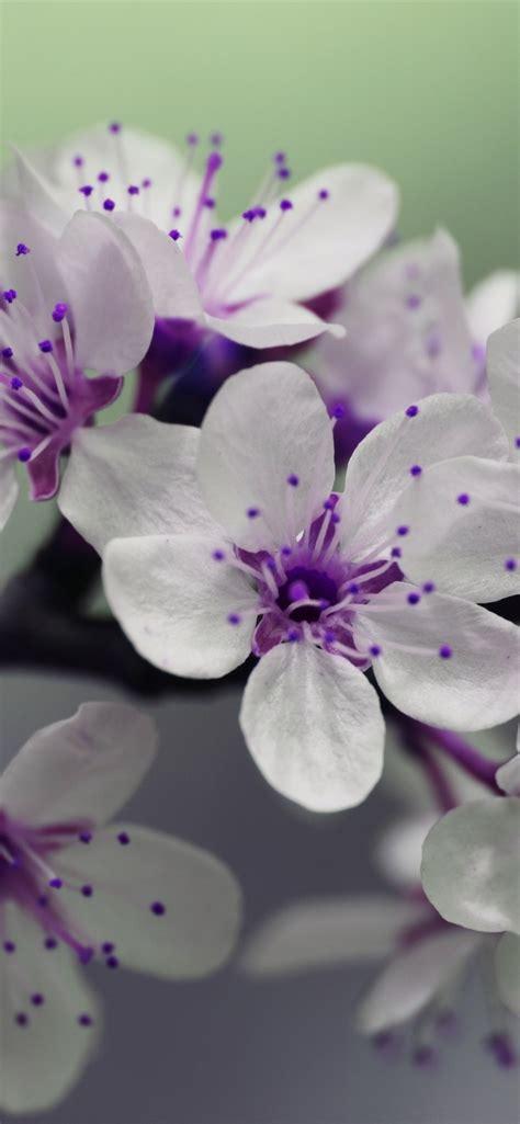 white flowers purple pistil  iphone xs max