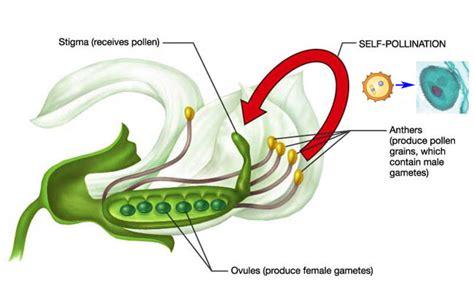 Neonicotinoids Pollinators In Peril