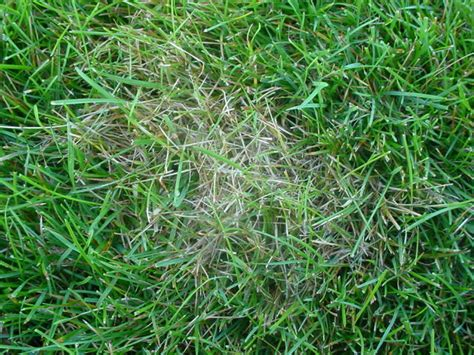 sod web worms keep it green by grounds keeper inc