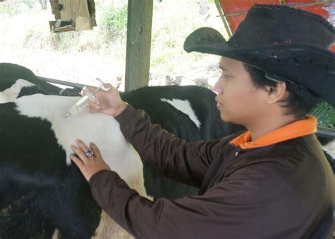 Mesin Pembuat Pakan Ikan Nila ternak sapi bandung obat penggemuk sapi potong