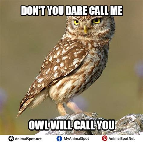 Owl Memes - owl meme related keywords owl meme long tail keywords