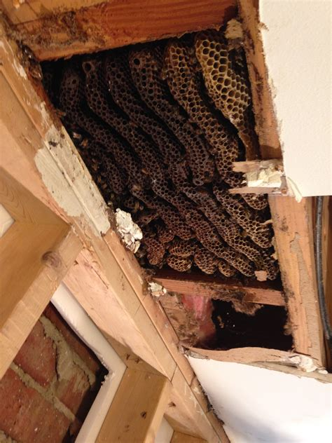 bee removal pictures indiana bee rescue