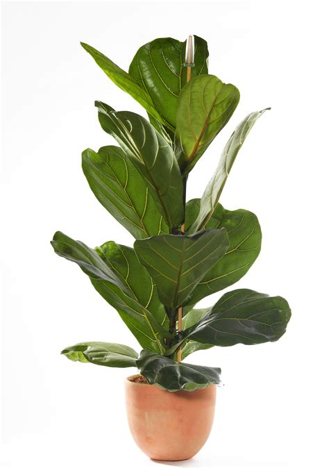 Best Indoor House Plant The Best Indoor House Plants And How To Buy Them Indoor