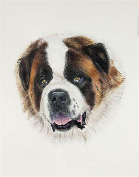 17 best images about watercolor pencil portraits on cocker spaniel pet